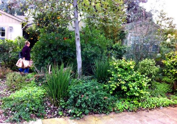 Seitelman Residence Landscape Design 2