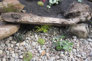 habitat rain garden detail