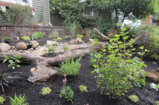 habitat rain garden