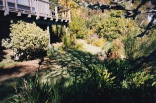Saratoga, California hillside landscape